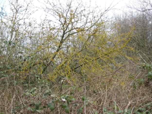 Beam Valley Tree