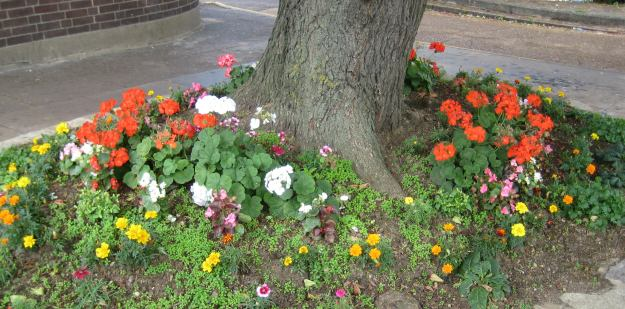 Osterley station's attempt to win the TfL Floral Prize 2013? Or guerilla gardening by locals?
