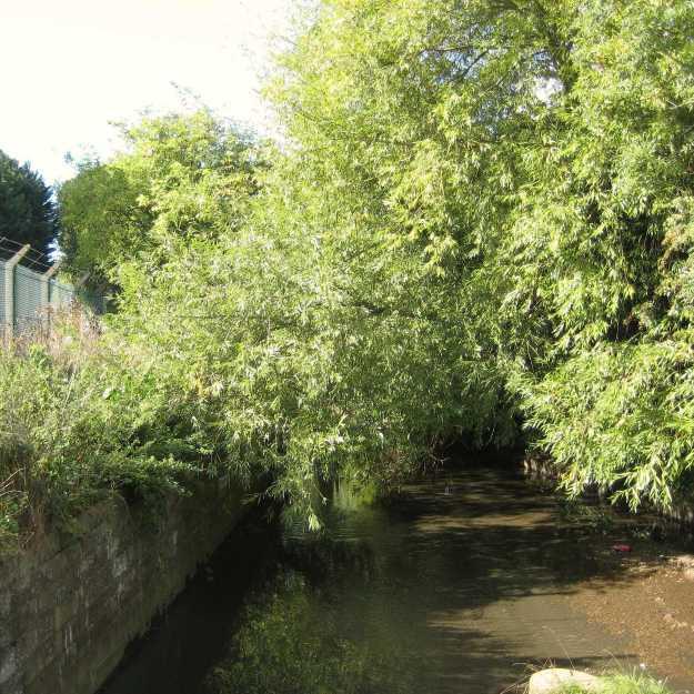 The muddy waters of Yeading Brook at Ruislip Gardens.