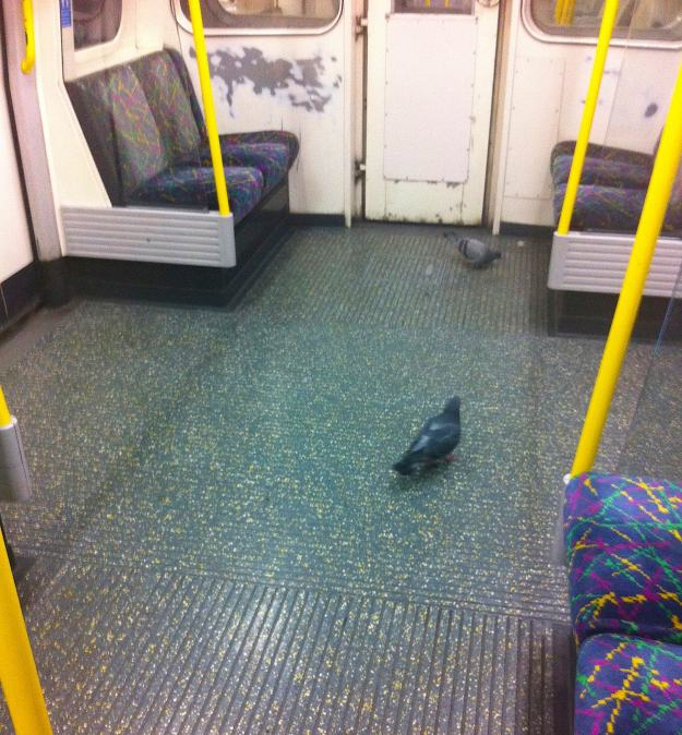 Herbert and Sherbert hop on at H'Edgware Road, pop off h'at Paddington. No fuss, matikins. We're seasoned commuters.